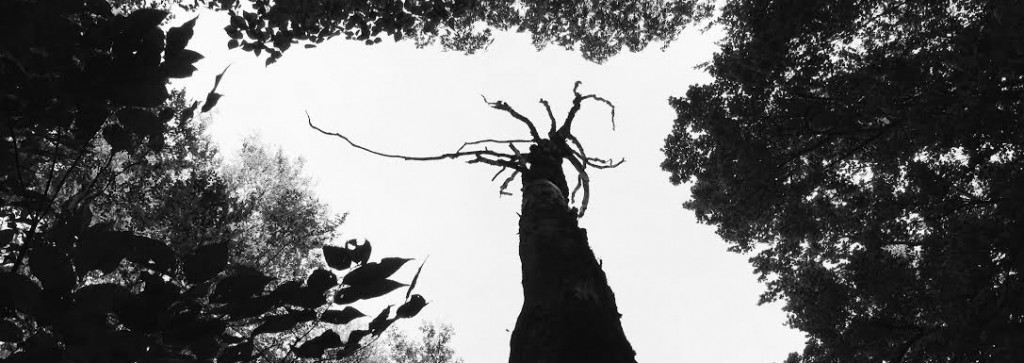 The Tricky Truth about Tractatus Trees (updated)