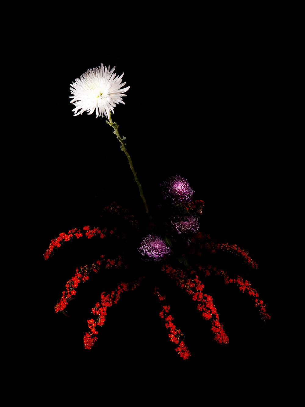 Illenberger flowerworks 1