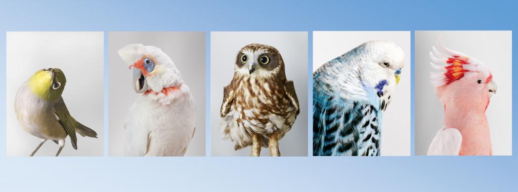 (portraits of birds by Leila Jeffreys)