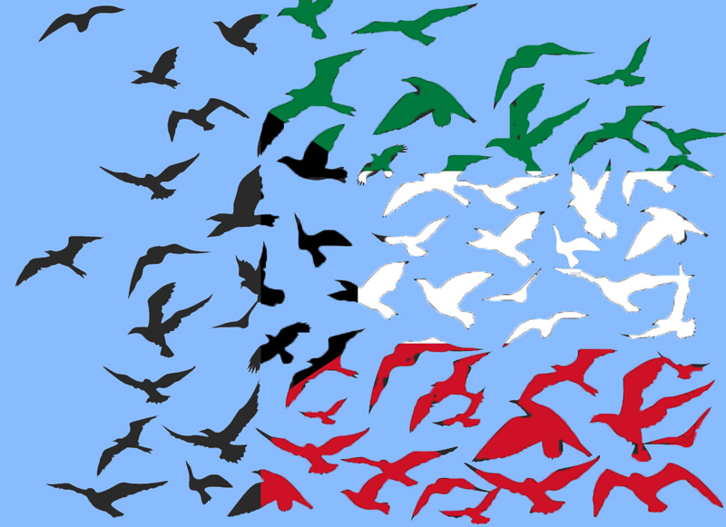 Kuwait Flag Birds