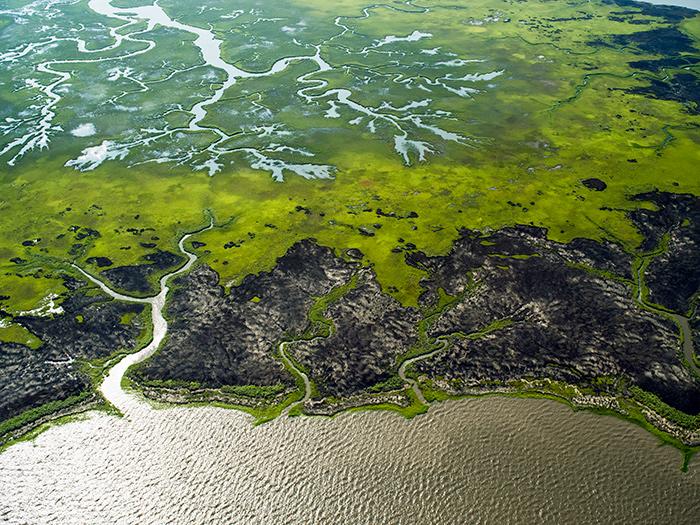 "J. Henry Fair, ""Coastal Wetlands"""