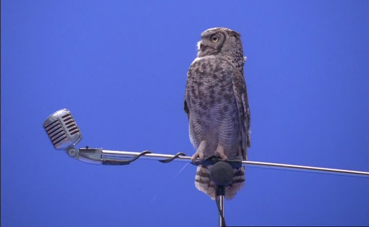 owl-on-microphone